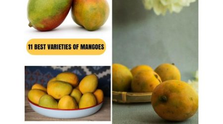 Varieties of Mangoes