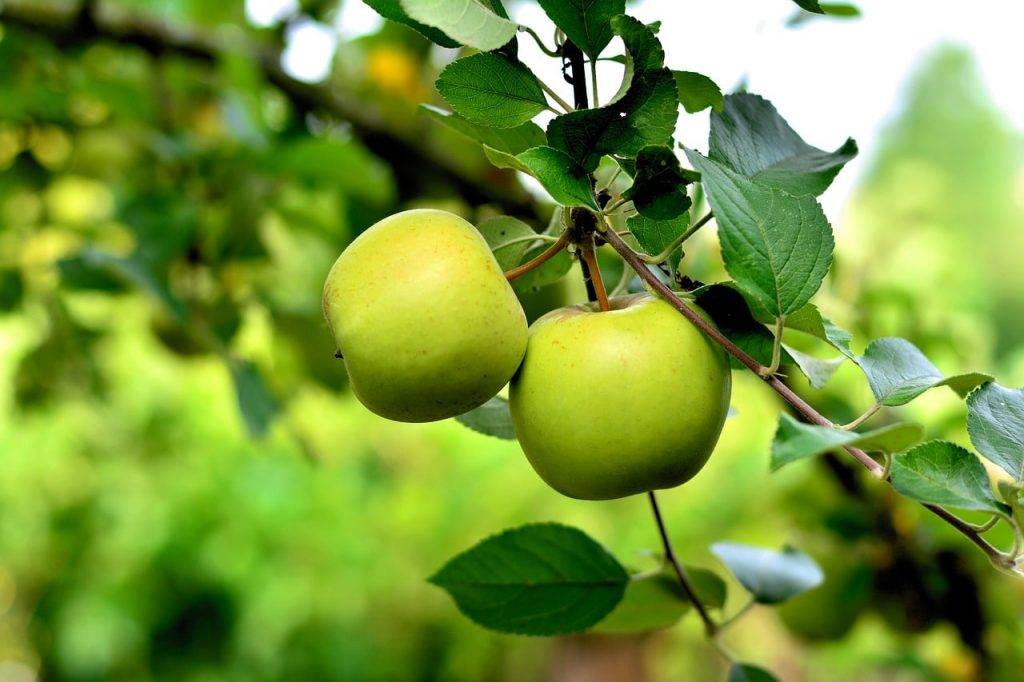 health benefits of green apple