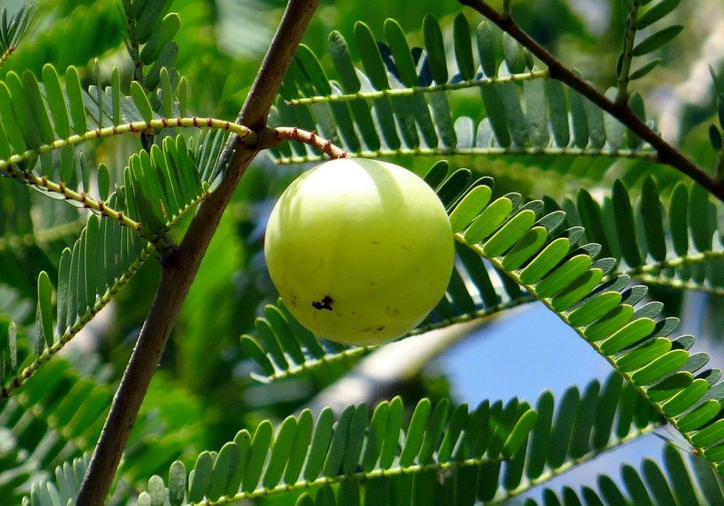 benefits of amla powder