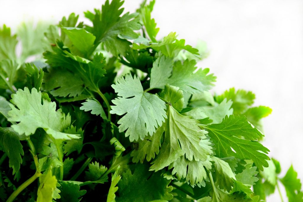 8 great substitutes for coriander