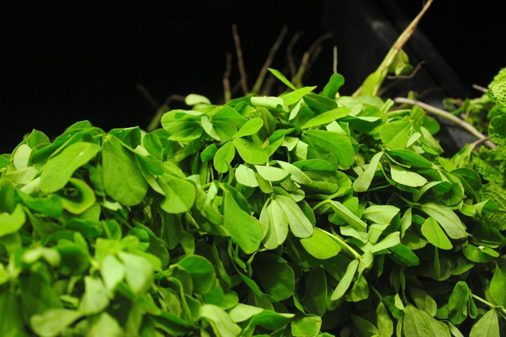 fenugreek seeds for diabetes and cholesterol