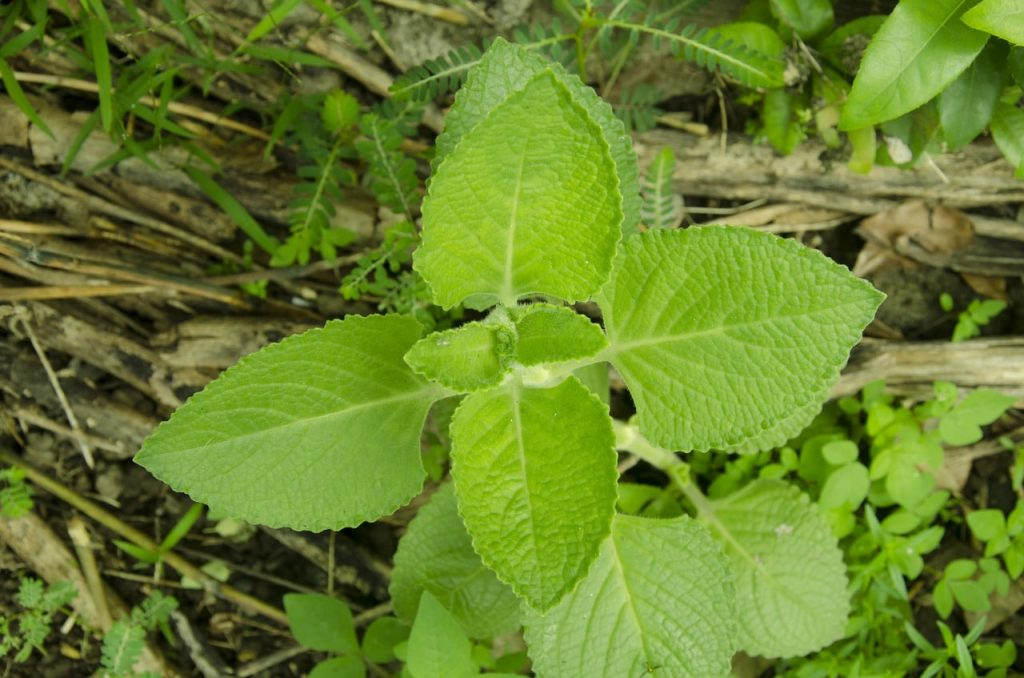 6 tasteful and beneficial substitutes for oregano