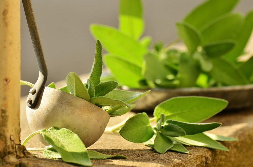 6 tasteful and beneficial substitute for marjoram