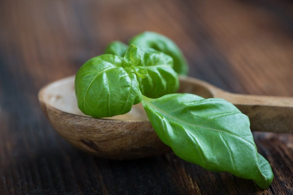 benefits of basil leaves