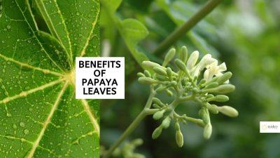 Benefits Of Papaya Leaves