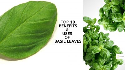 top 10 benefits & uses of basil leaves