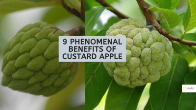9 Phenomenal Benefits Of Custard Apple