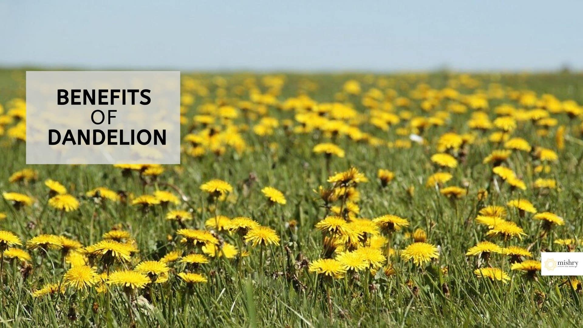 Benefits of Dandelion