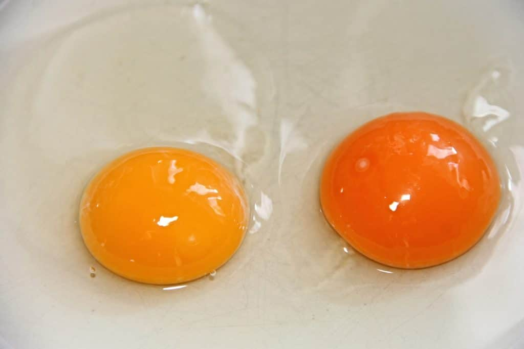 Protein In Eggs: How Many Can You Eat In A Day? — Mishry.com