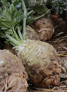 uprooted celery