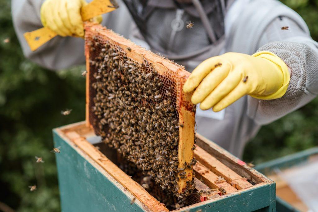 Pick Up Honey Locally